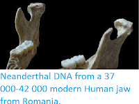 http://sciencythoughts.blogspot.co.uk/2015/09/neanderthal-dna-from-37-000-42-000.html