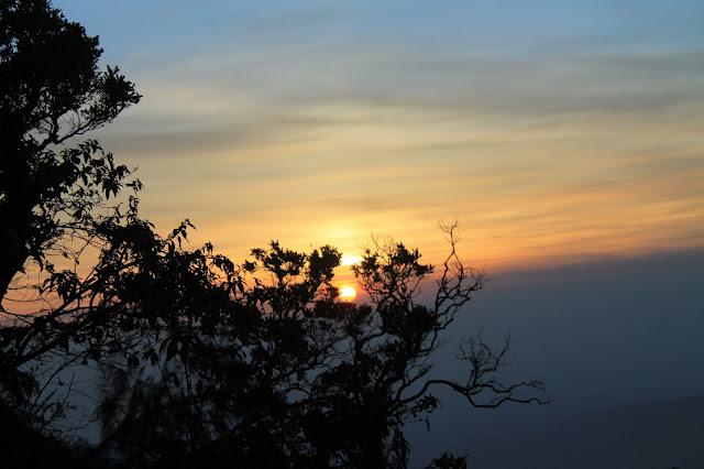 Sunrise dibalik pohon - Bromo