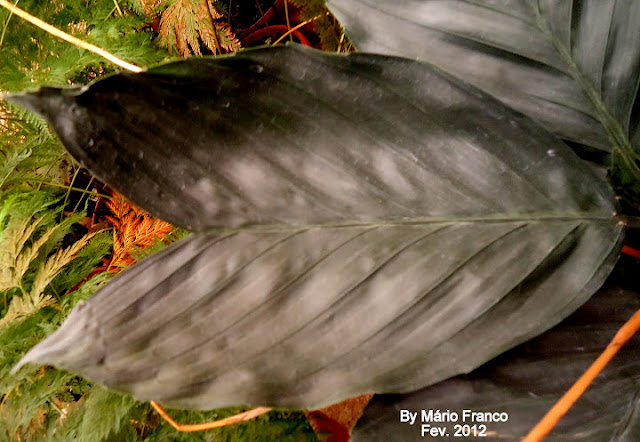 Folhas da palmeira metalica