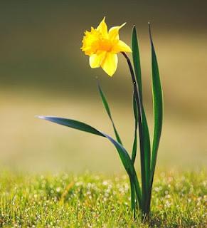 Nomes de flor para meninos - Narciso amarelo (Foto: DondeVive)