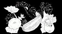 cucumber plant clipart