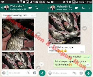 Umpan Serbuk Ikan Mas Anti Zonk