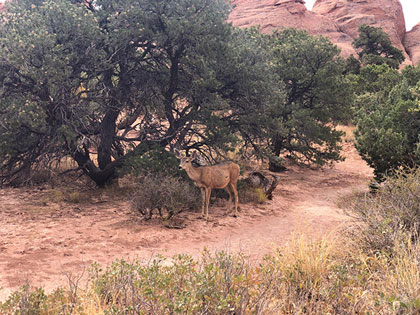 Oops, let me walk away, so the deer can eat her lunch at Arches National Park (Source: Palmia Observatory)
