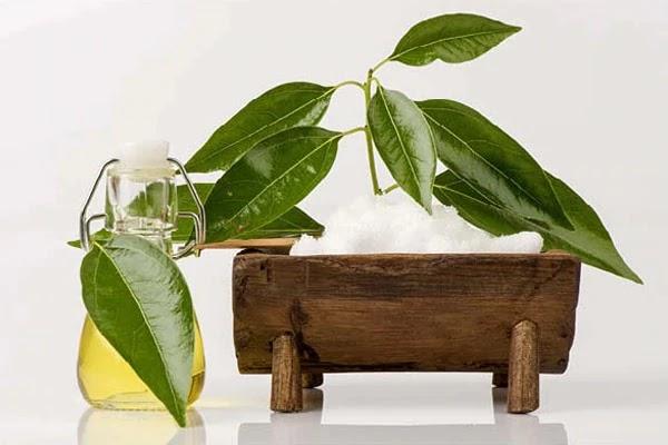 कपूर  अरंडी का तेल और जैतून के तेल  से गंजे सिर पर बाल उगाने का नया तरीका