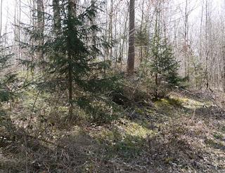 Grabhügel zwischen Forsthaus Kasten und Buchendorf