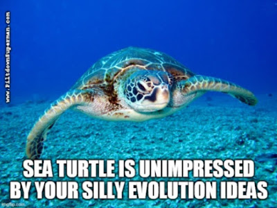 There are significant disagreements among secular scientists about turtle evolution. That is because there is no evidence.