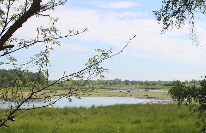 De noordelijkste kolonie flamingo's spotten op de grens met Duitsland