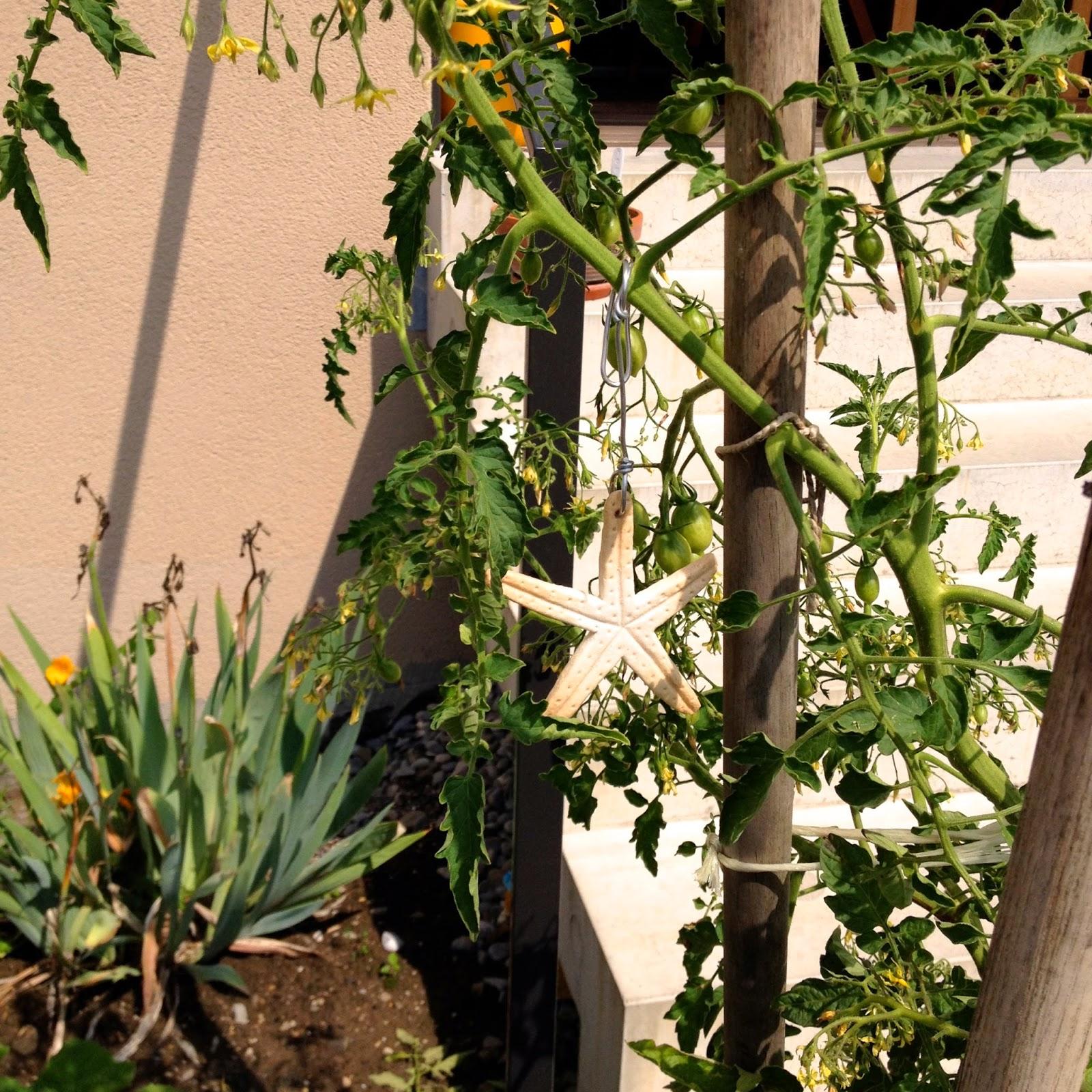 Puis J'ai Accroché L'étoile à Un Plant De Tomates Cherry