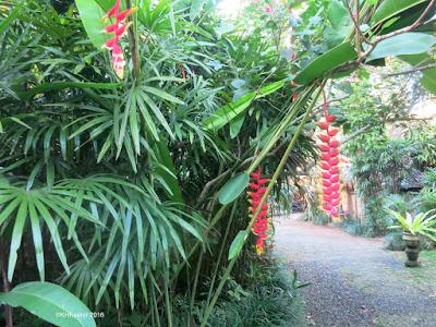 Heliconia, Ubud, Bali