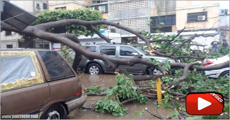 Viento y lluvia tumbaron varios de árboles en Caracas (Falta de Mantenimiento y limpieza)