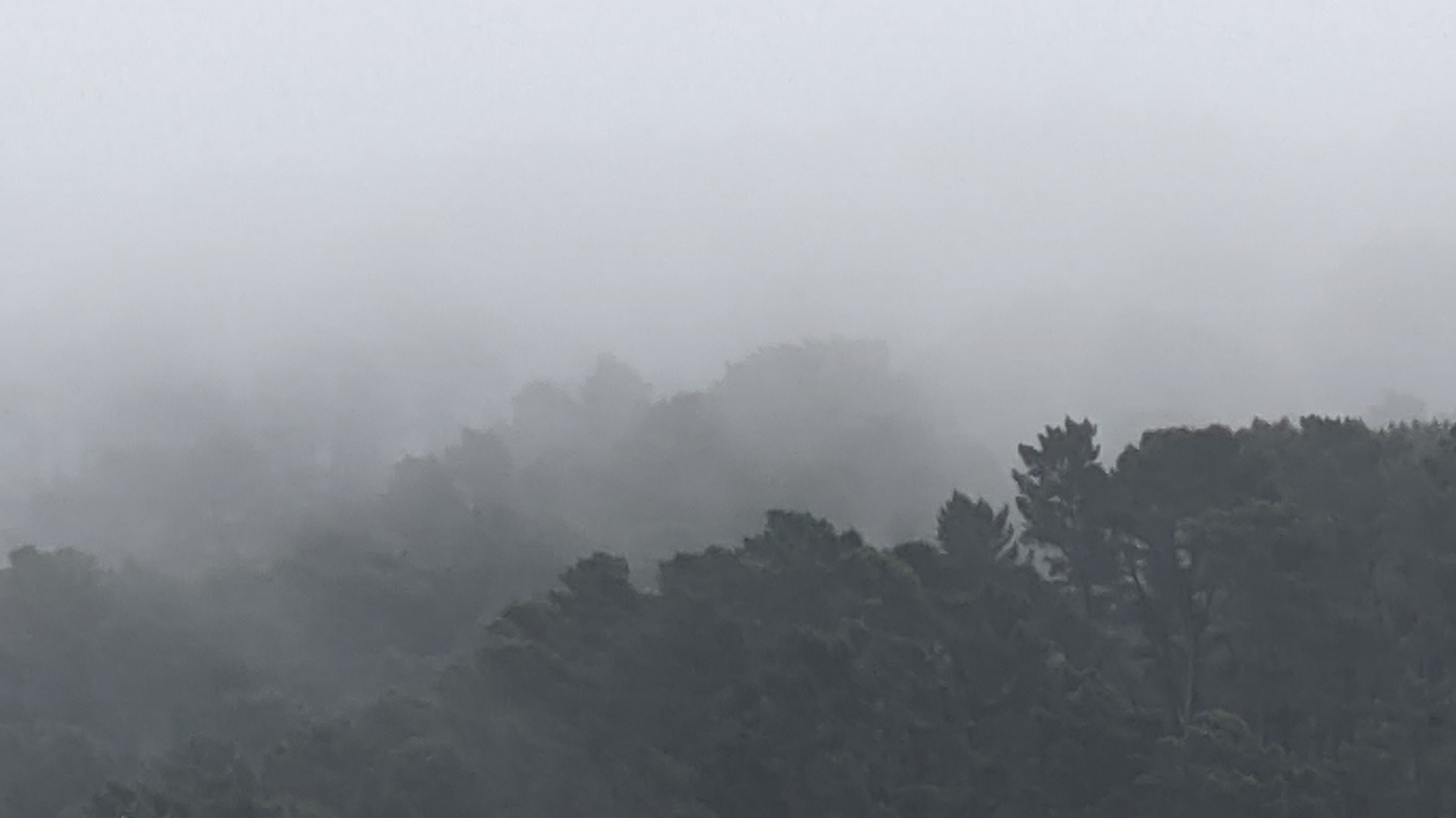 Misty Tinakori Hills in Wellington (Aotearoa New Zealand)