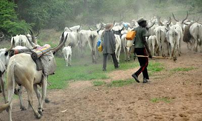 Herdsmen Attack Taraba Again... 4 Killed, DPO Says Police Vehicle Has No Fuel