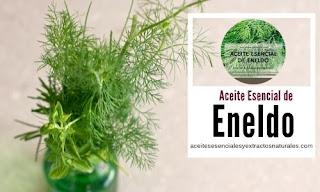 Aceite esencial de Eneldo en listado de aceites y esencias para Aromaterapia
