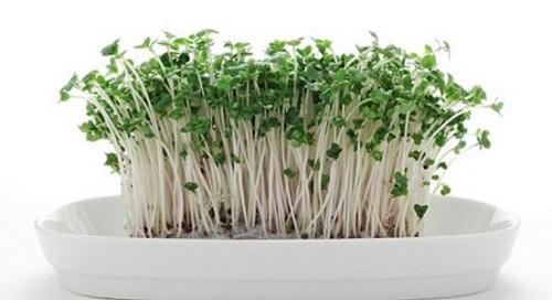 Rau mầm bông cải xanh