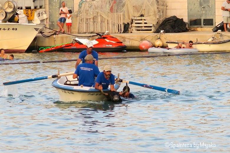 スペインの海の牛追い祭りで海に落ちた牛をボートに乗って救助する係員