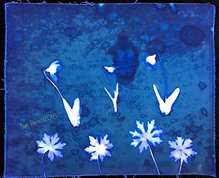 Wet cyanotype_Sue Reno_Image 268