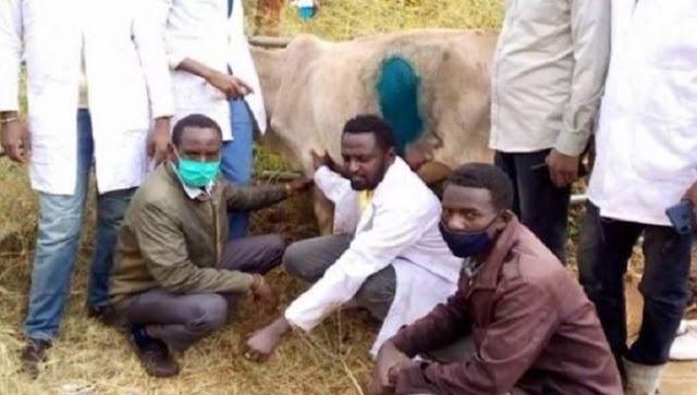 50Kgs of plastic removed from cow's stomach in Ethiopia