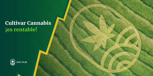 ¡Atención emprendedores! Con mil 200 pesos puedes entrar al negocio de la marihuana