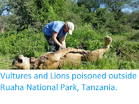 https://sciencythoughts.blogspot.com/2018/02/vultures-and-lions-poisoned-outside.html