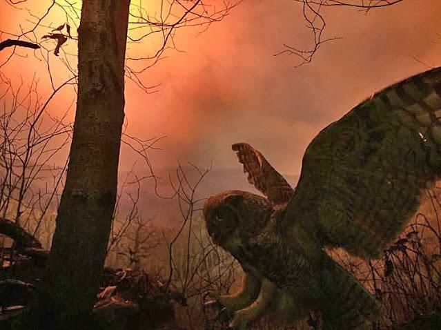 Screenshot, IG Post, Joe Noderer, Carnegie Museum of Natural History Diorama (Detail), 2020