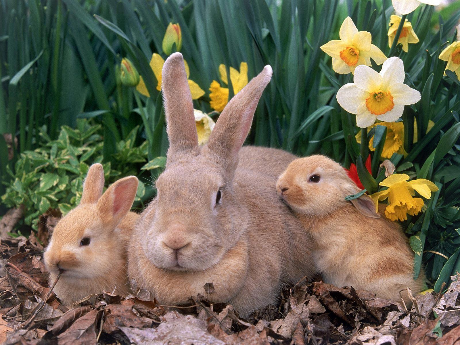 6 cute bunny rabbit easter wallpapers for desktop free - Easter bunny wallpaper ...