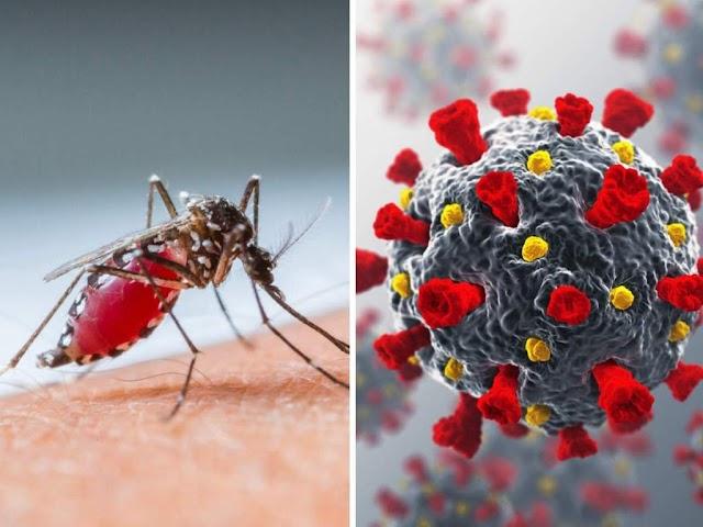 ग्रामीण क्षेत्रों में हो रही मौतों के पीछे कोरोना है या फिर डेंगू जैसी जानलेवा बीमारी ?