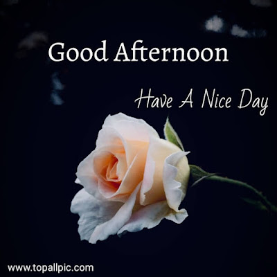 images of good afternoon wishes photo