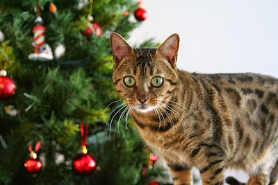 Tabby cat and Christmas tree