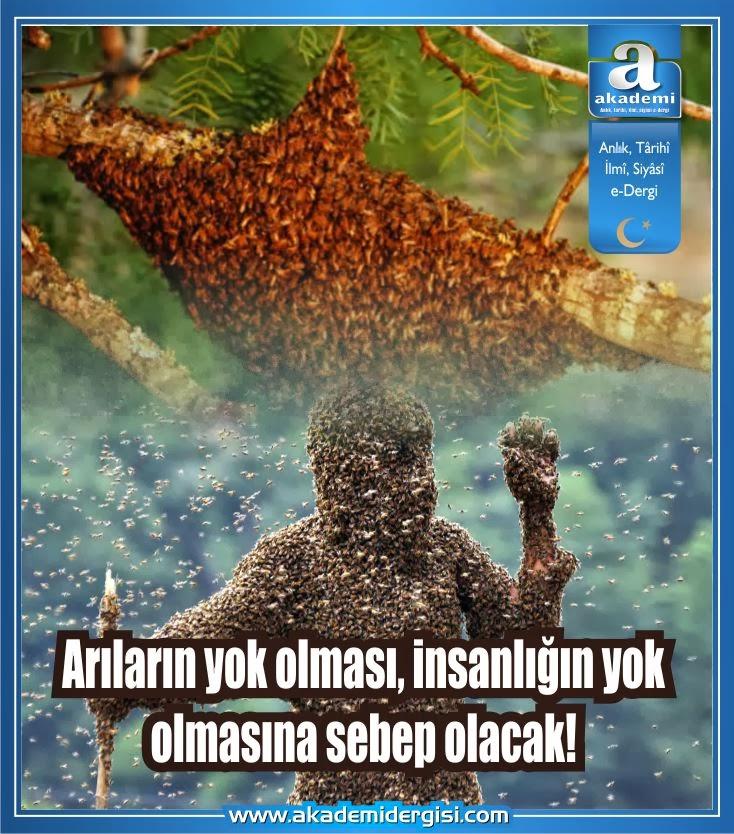 Arıların yok olması, insanlığın yok olmasına sebep olacak