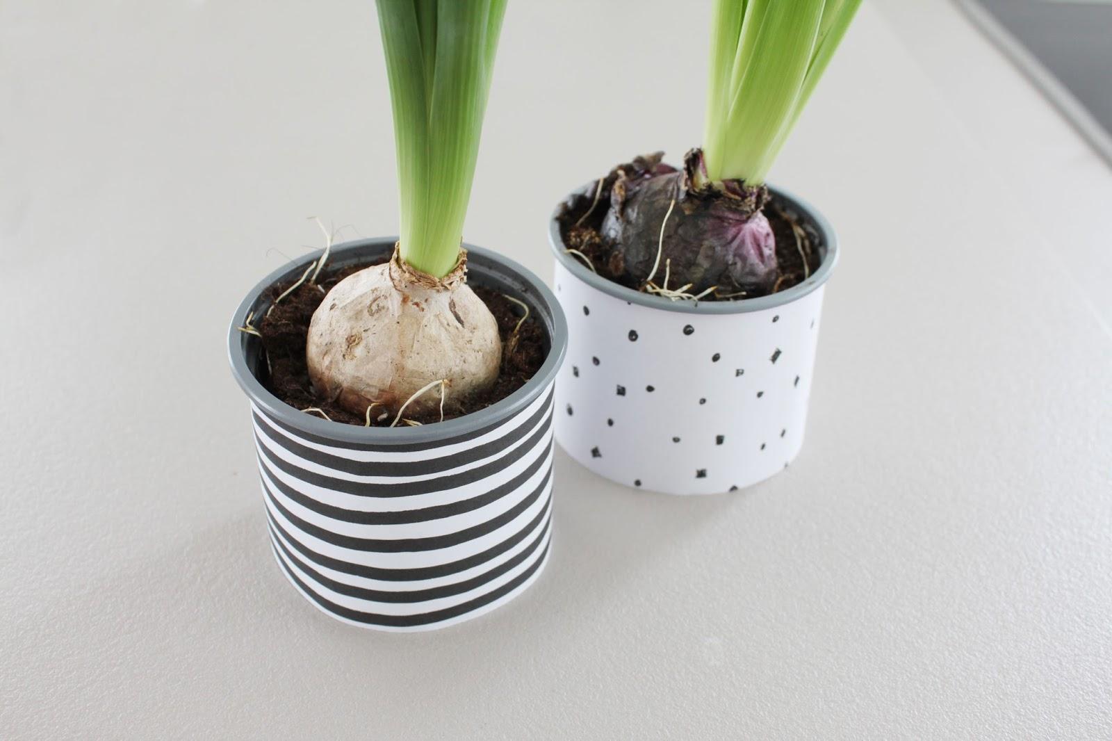 einfacher DIY Narzissen Blumentopf im nordischen Stil mit Papierbanderole