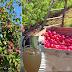 Beneficios de consumir Manzana