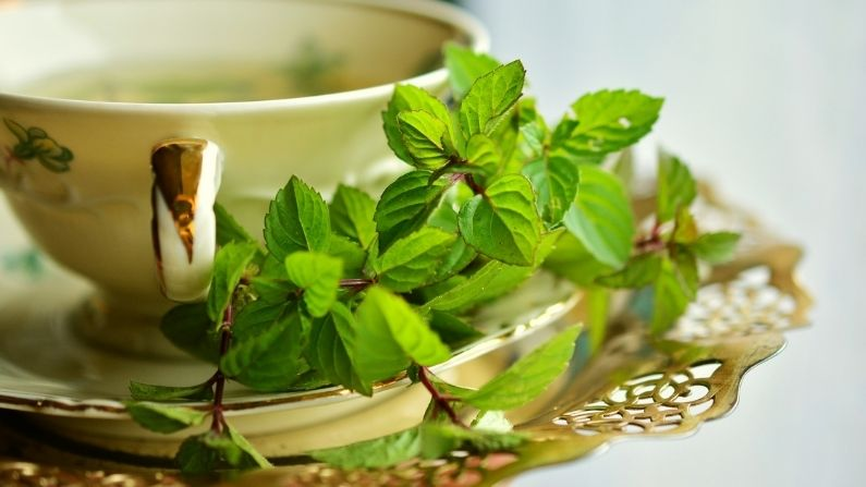 Peppermint-Benefit-Peppermint-enhances-your-skin-and-prevents-hair-loss