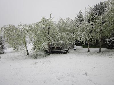 wiosenny ogród w śniegu