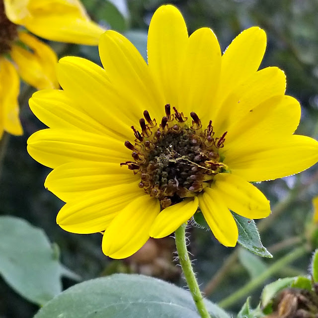 Cultivate wildflowers and sunflowers and surround your garden with a living fence.