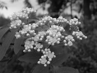 slow life, przyroda, blog