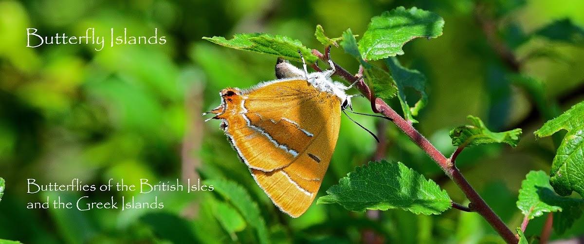 Butterfly Islands
