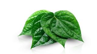 manfaat daun sirih untuk sakit gigi, cara mengurangi sakit gigi, obat herbal untuk sakit gigi