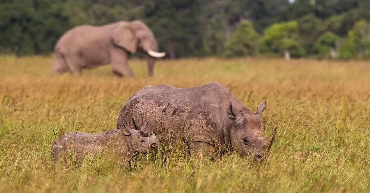 Elephant and Rhino Populations Have Been Increased In Tanzania Thanks To Anti-Poaching Task Force