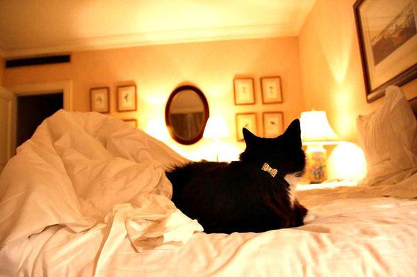 langham sydney cats