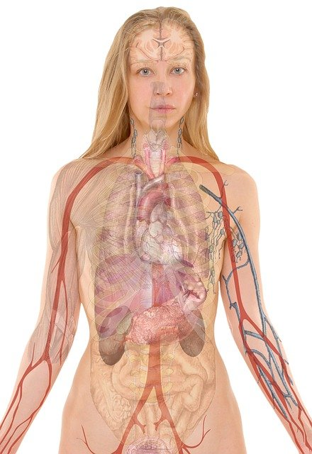 Smoking will cause respiratory organ illness by damaging your airways and also the little air sacs (alveoli) found in your lungs. respiratory organ diseases caused by smoking embrace COPD, which has respiratory disorder and bronchitis. fag smoking causes most cases of carcinoma.