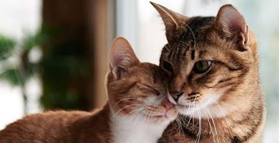 Mengapa Rasulullah Sangat Sayang Terhadap Kucing