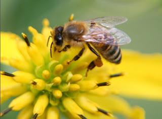 http://www.kayuagung.com/2016/03/cara-sederhana-mengobati-sengatan-lebah.html