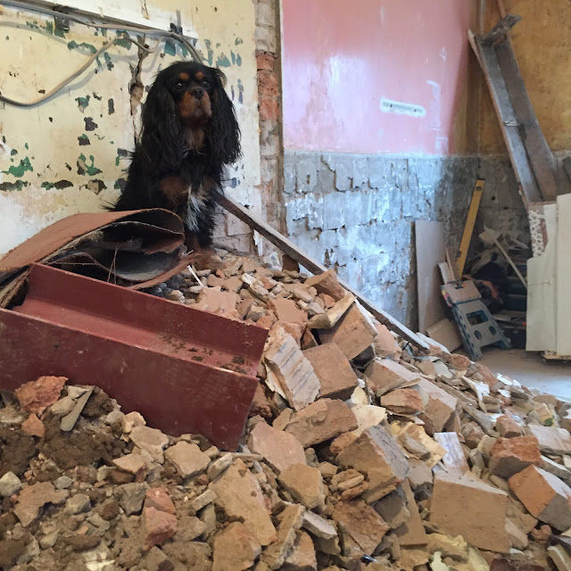 Dog on top of renovation rubble
