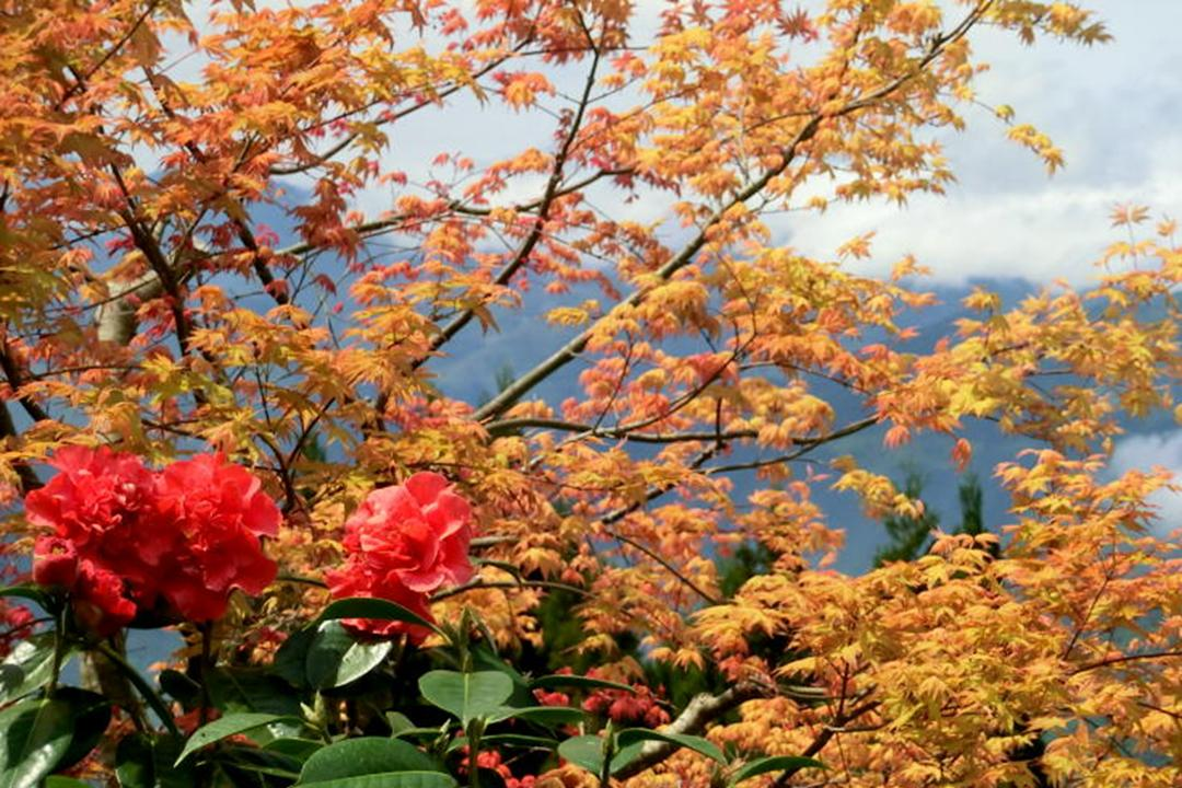 綠林遊梭網 (綠林即景): 巴陵之春 (作者--林迷)
