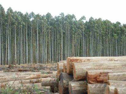 Los recursos renovables no renovables e inagotables for Materiales para un vivero forestal