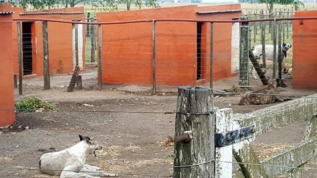 Operativo Galgo Blanco: Desarticulan banda que fabricaba medicamentos para animales en un moderno laboratorio y criaba canes para carreras