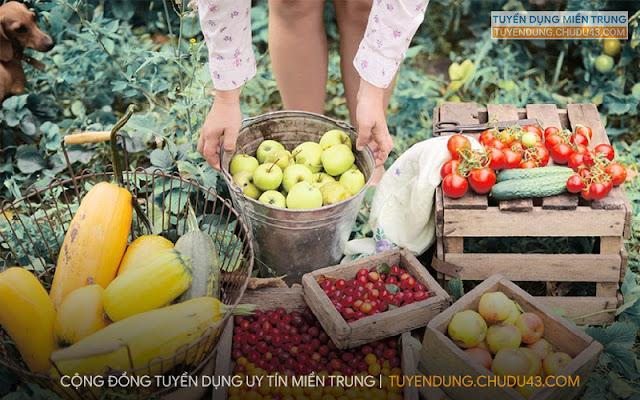 5t markets, 5t markets danang, 5t food tuyển dụng, 5t food da nang