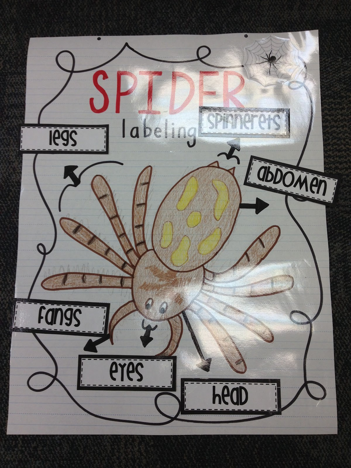 Teaching With Terhune Spider Unit