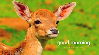 wild animal deer images with good morning wishes