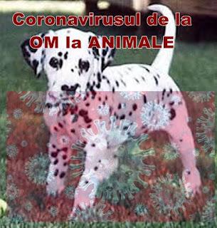 coronavirusul din china se poate transmite de la om la animalele de companie